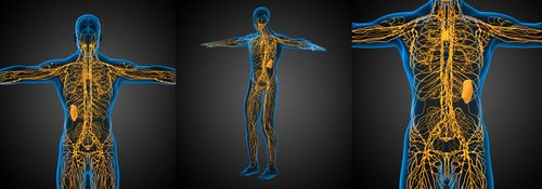 Lymph Flow and Massage